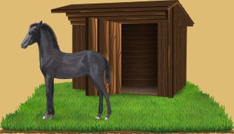 Los caballos abandonados